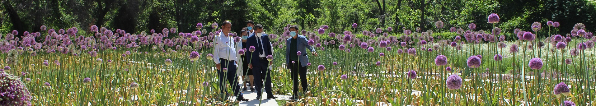 Tashkent Botanical Garden named <br>after academician F.N. Rusanov